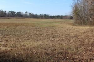 67 ac- portion of south central farmland 1